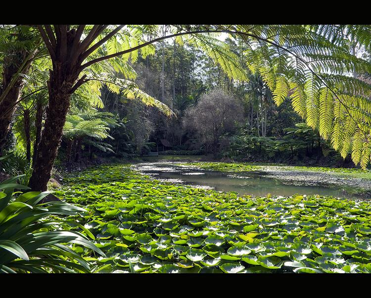 24/365 - Mt Tambourine, Botanical Gardens