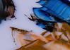 _DSC9199-碧潭-銅板師父的色盤 (May-margy) Tags: sunset pets nightshot taiwan swimmer 夕陽 台灣 夜景 suspensionbridge 碧潭 寵物 waterfestival lifeguards taipeicounty 台北縣 新店市 sindiancity 救生隊 20100718 maymargy 新店水岸文化節 新店吊橋 泳者 玩曝光