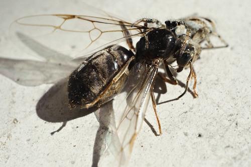 [SPIDER WARNING] A dark feast