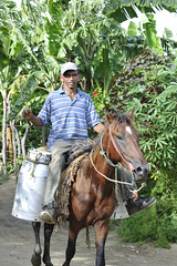 2010 06 Milk Farmer on his Horse - 068 (vinylmeister) Tags: horse animals june photography dominicanrepublic year cities 2010 photocamera nikond700 nikonafnikkor85mmf14dif guajaca