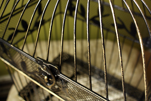 Bird cage04