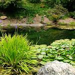 Japanese Pool Pano thumbnail