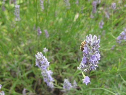 Camera shy bee