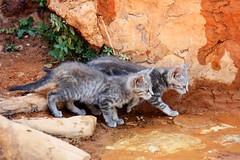 Roussillon (Andrea Schaffer) Tags: summer france cat kitten july kitty provence ochre roussillon quarry ocre feral 2010  canonefs1755mmf28isusm canon450d canonefs1755mmf28usm