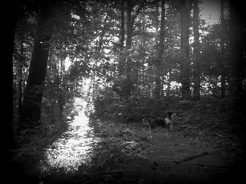 shadow shot- assabet river trail
