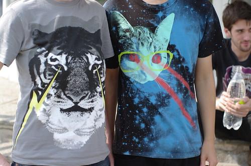 laser-eyed felines unite!