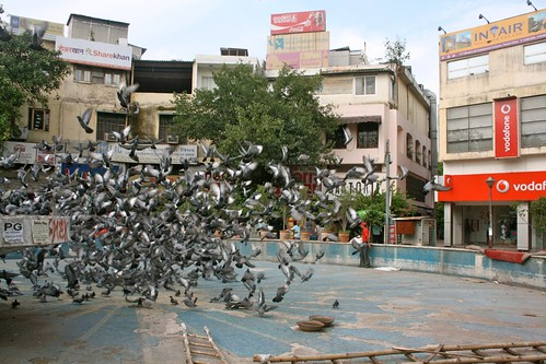 City Moments - The Conference of Birds, Basant Lok Market