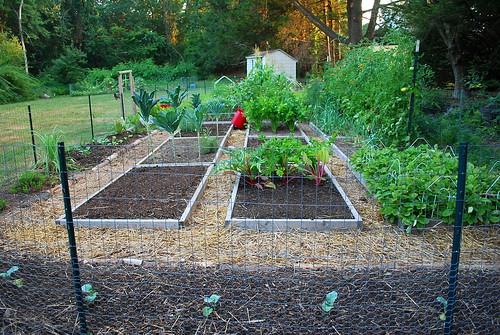August Garden Clean up 2
