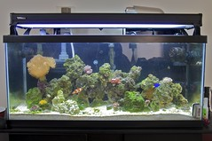 Marine Tank by edanley, on Flickr