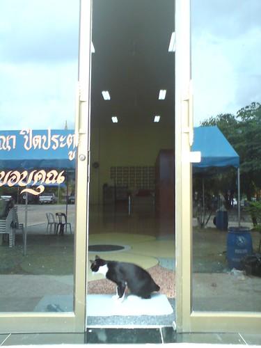 2010-07-26 泰國普吉島拜拜DSC01039