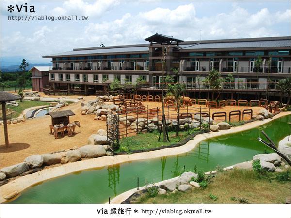 【新竹住宿】來去和動物住一晚~關西六福莊生態渡假旅館9
