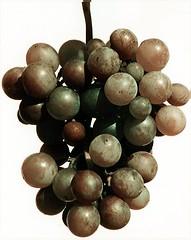 uva2 (pungolo) Tags: un grappolo trattato