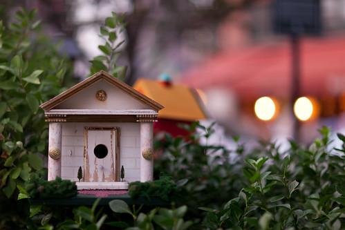 Bird Palace (鸟舍)