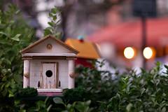 Bird Palace () (pamhule) Tags: bird canon bokeh birdhouse birdhouses  5dmarkii  5dii pamhule jensschott jensschottknudsen  vincentmele mccarthysquare