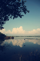 Life is a Reflection! (VinothChandar) Tags: life cloud india reflection nature clouds mirror living scenery village heart being feel kerala formation soul boating feeling mirrorimage agriculture cloudformation backwaters existence alleppey waterscape likeness allepey alapuzha alapuzzha