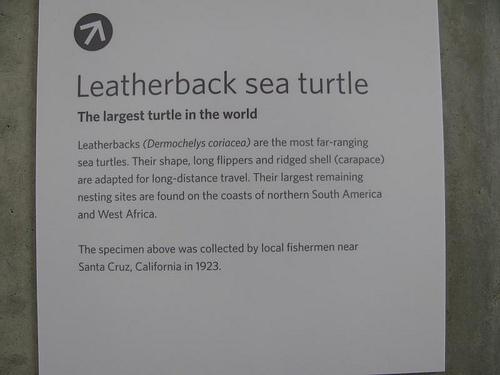 Steven Damron leatherback