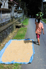 This Is Why We Wash Rice (cwgoodroe) Tags: road door summer bali sun beach statue rock forest indonesia island tin lava asia surf locals rice culture carving rusted limestone cockfight ubud kuta lifeguardstand seminyak moneky batubulan