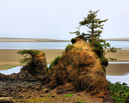 8x10 Oregon Coast IMG_7623