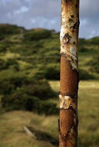 Rusting Sign Post