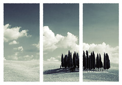 Altri tempi (Epoch) Tags: new trees sky colour nature colors clouds photoshop photography photo europa europe italia wine image artistic awesome natura paisaje best campagna adobe tuscany nubes chianti siena montalcino pienza montepulciano fiori toscana valdorcia davide paesaggi malinconia vino girasoli epoche quirico torrenieri campicoltivati davidefolloni