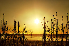 Omne ignotum pro magnifico (AnnuskA  - AnnA Theodora) Tags: light plants sun nature silhouette fog backlight landscape scenery dry explore backlit frontpage deserted sunsetmania