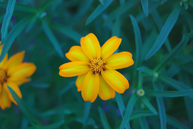 yellow flower at dusk
