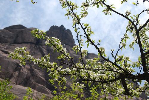 l82 - Blossoms below Turtle Peak