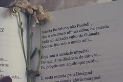 Passos da Cruz, Fernando Pessoa (Amanda Maia ♥) Tags: flowers flower vintage book flor livro margarida margaridas