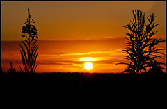 Silhouette (Dune_UK) Tags: travel sun eye art look field liverpool landscape joseph blog different photographer image sale farm sold straw photograph frame wife latex hay setting seen bails glynne pritchard scouser rainford billinge