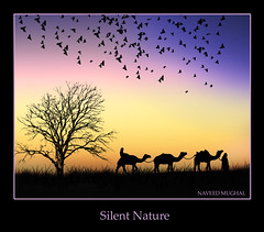 Silent Nature (Naveed Mughal) Tags: life birthday city friends pakistan sea sky people tower heritage love beach nature water colors beauty true loving thanks kids for nokia fantastic sand hug friend alone village treasure image brother awesome great memories smiles happiness giving imagination forever kuwait caring khan sweetheart needs lovely friday dear waving magical liberation pura lahore imran allah salmiya sharq mughal farwaniya lahori sialkot naveed neika mangaf zeeimran420 jugnoo creativezee sialkoti pakistanies 6220c1 grouptripod darogawala 23082009