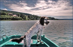 ~~Capitaine Haddock ! ~~ (Jolisa) Tags: friends sky dog chien lake nikon eau lac perro ciel cielo franchecomt barque doubs rives lacstpoint lovely~lovelyphoto larchedejo