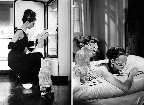 Cat-Breakfast_at_Tiffanys_m7cui3