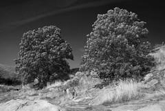 (nome e cognome) Tags: trees blackandwhite bw blancoynegro alberi helsinki noiretblanc bn arbres suomenlinna biancoenero finlandia redfilter nikkor1224f4 nikond80 filtrorosso