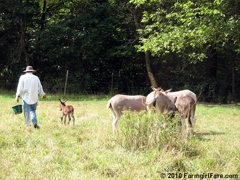 Joe and donkeys 1