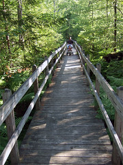 The boardwalk at Sapsucker woods