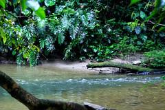 Selva Viva - amazonia Ecuatoriana