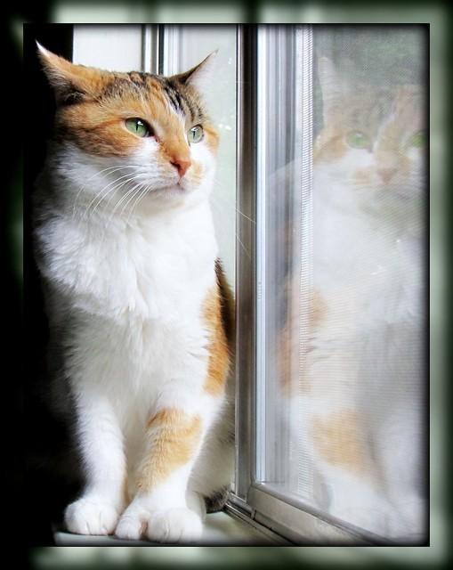 I see a Pretty Kitty ツ