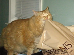 Jasper biting plastic