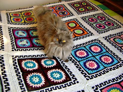 Hannah (tá muito parecida com o gato da Alice, tá não? Só que ela é boazinha....)