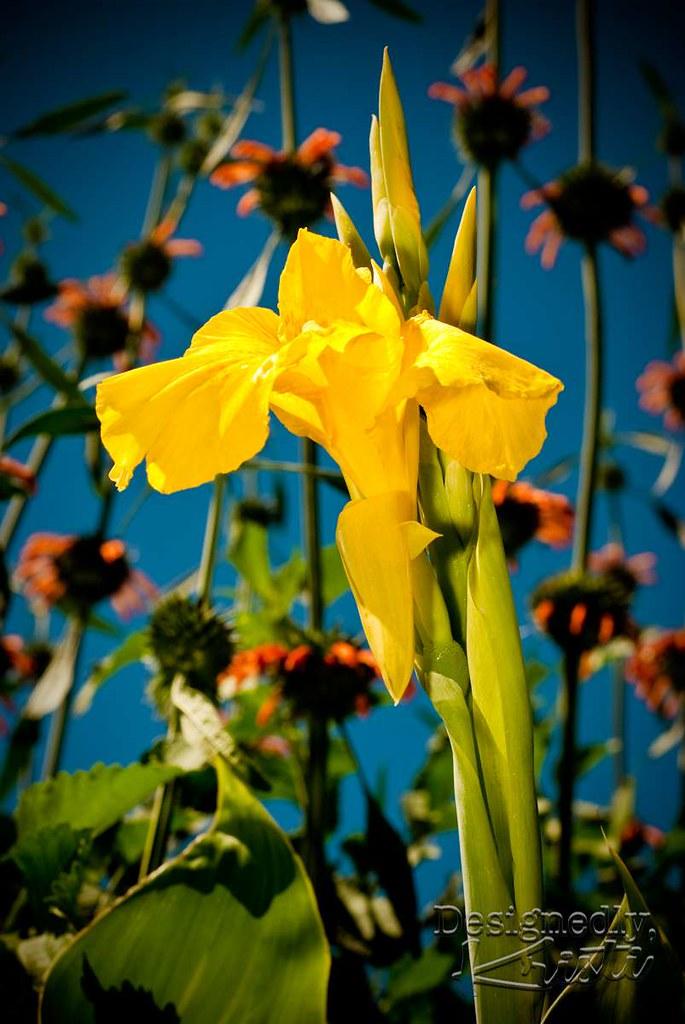 Flowers at Mount Vernon Garden