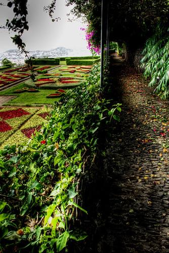 Botanic garden. Madeira. Funchal. Jardin botánico