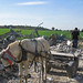 Horse drawn cart removes rubble