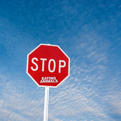Vegetarian Roadsign (borealnz) Tags: road blue red sky sign clouds warning square vegan funny message traffic stop stopsign vegetarian roadsign vegetarianism bsquare stopeatinganimals borealnz