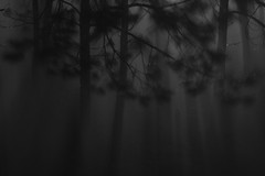 Shade's Forest (matthileo) Tags: light shadow mist storm water rain fog night dark glow shadows dwcffnight