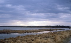 Sky (btusdin) Tags: saltmarsh delmarvapeninsula dailyshoot ds445