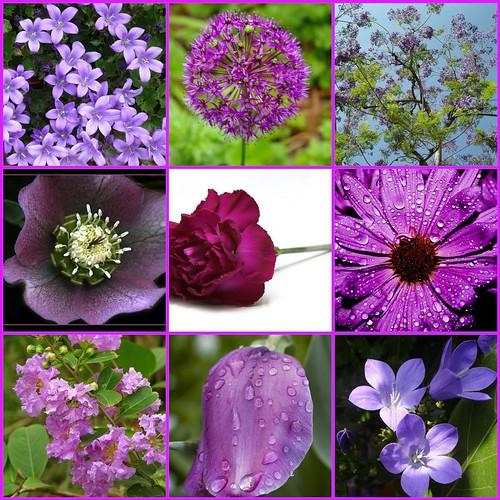 purple petals...