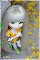 Yellow (Au Aizawa) Tags: flowers japanese clothes pullip rement fashiondoll paja ixtee