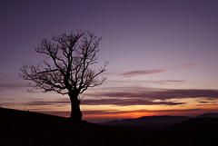 Lonely Tree At Dusk   [Explored] (nikolaos p.) Tags: trees sunset tree nature outdoors sunsets greece chalkidiki halkidiki naturesfinest