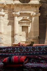 Pharao (LynxDaemon) Tags: jordan petra cat carpet king royalty kitten impressive rock pillars huge immense