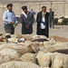Uyghur shepherds
